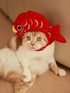 Cat with a fish hat. 'Nuff said.