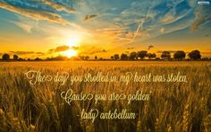 """""""The day you strolled in, my heart was stolen, cause you are golden."""" - lady antebellum  #golden #ladyantebellum #countrymusic #love"""