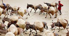 Mode of transport in Lamu.