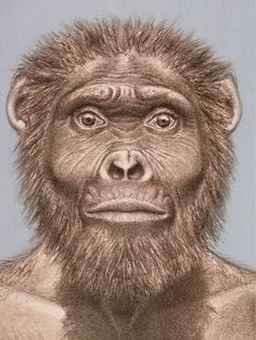 "Australopithecus garhi, first stone tool users (Act 5). ""This appears to have many of the characteristics of the other Australopethcines but differs in that it has large molars, like the Paranthropus species. The partial skull fossil was found in association with stone tools. This may be the earliest species to use these."""