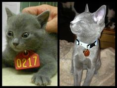 Weylin Grey:  From death row to loved child in forever home...♥