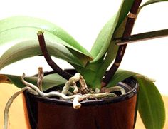 What To Do After Orchid Flowers Fall