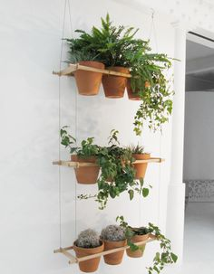 Plant hanging shelves--can do this with herbs on the back patio