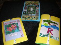 EXCELLENT rainforest lapbook