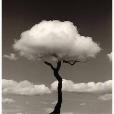 Cloud tree.