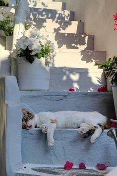 stair, white cats, cat naps