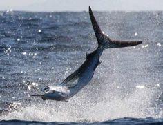 Go deep sea fishing