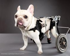 Special pets with special needs