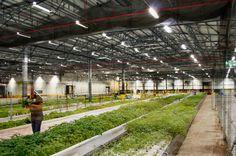 Auto plant transformed into #hydroponic #garden: Landscape Architect Rick Kacenski, HOK Planning Group, St. Louis.