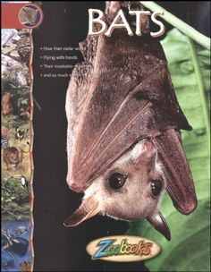 Bats - Zoobooks at theBIGzoo.com, an animal-themed superstore.