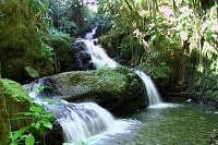 Hawaii Tropical Botanical-Gardens.