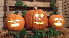 Make your home the most FESTIVE on the block with the BEST Singing Pumpkins Effects and Animations you can get!
