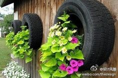Old tire?  Grow something!
