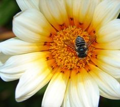 5 tips for creating a garden that's a haven for bees.