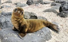 A baby seal pup in the Galapagos. (From: 10 Islands to See Before You Die)