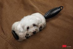 3M Lint Roller: Dog. kkkk nais ou menos assim que deveria ser! Por isso ñ tenho animais de estimaçao! Mas agora... vou pensar! rs Grande montagem!