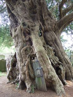 gate to the underworld. The Yew is held as sacred to Hekate and the Furies