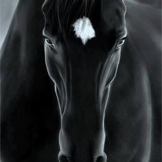 "black beauty "")"