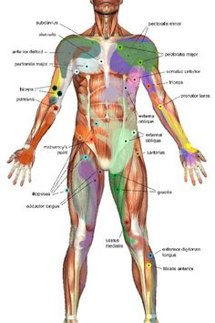 Anatomy http://anatomieducorpshumain.blogspot.com/
