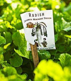 Heirloom seeds 101: http://www.midwestliving.com/garden/ideas/heirlooms-seeds-for-beginners/