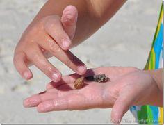 hermit crab, @Charlotte Matias Cha @Matty Chuah Heartfelt Home