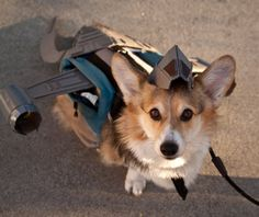Corgi dog dressed as the Serenity ship HAHAHA