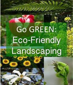 Go Green: Eco-friendly Landscaping Ideas