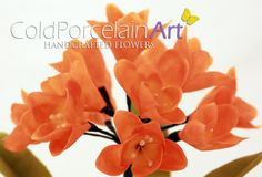 Cold Porcelain Art. Handcrafted Flowers. www.coldporcelainart.com #coldporcelain, #clay flowers, #clivia