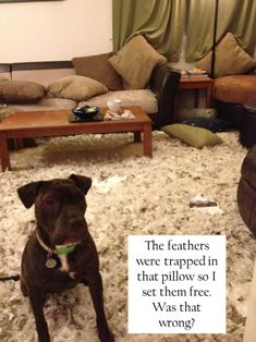 """I could see my dog doing this... """"We left for the evening and returned to Morty having shredded a magazine, box, and spread the down feathers from a pillow uniformly across the living room."""""""