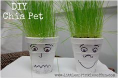 DIY chia pet for res hall rooms
