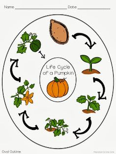 Education to the Core: Free Pumpkin Life Cycle Reference Sheet and Blank Graphic Organizer!