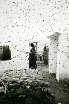 graciela iturbide | Tumblr
