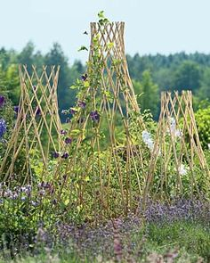 Willow garden trellises
