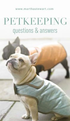 Petkeeping Questions