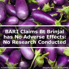 Bangladesh Agriculture Research Institute claimed on Sunday that genetically modified BT brinjal has no detrimental effects on human health, bio-diversity and environment though it said it carried out no research on the controversial food crop. More here: http://www.fooddemocracynow.org/blog/2014/sep/8/bari_claims_bt_brinjal_has_no_adverse_effects #GMOs #bio #food #ag