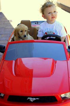 Cruisin'  #dog