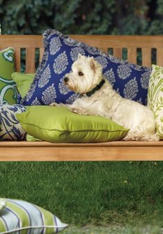 Pampered Pets on FrontGate's Mixed Print Pillows.