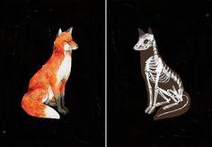 """""""Le Renard"""" and """"Le Renard (Anatomie)"""" by Jen Collins"""