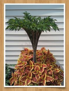 voodoo lily on pinterest corpse flower mike tyson and. Black Bedroom Furniture Sets. Home Design Ideas