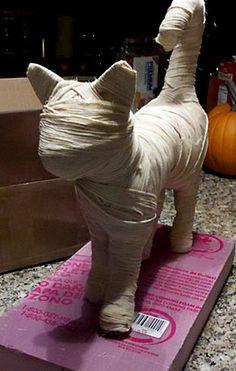mummy cat We love Halloween at Bootights - sexy spooky halloween www.shelbymason.com