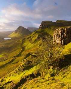 Quiraing tree - Staffin, Isle of Skye, United Kingdom by Bart Heirweg