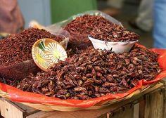 Chapulines Para una buena  quesadilla, Oaxaca oaxaca