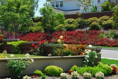 Red Flower Carpet roses on slope at Ladera Ranch in South Orange County, California, featured here by Landscape Design/Build magazine's e-newsletter.