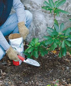 Fertilizing Basics - It pays to know why, what, how, and when to feed your plants