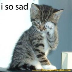 kitties with sayings - Bing Images