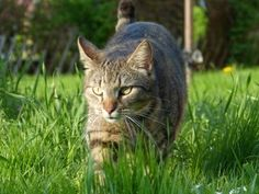 3 Things Your Cat can Teach You about Life