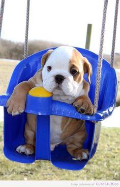 English Bulldog In A Swing #dog #great #dane #animal