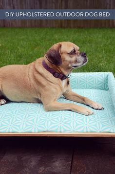 Click through to find out how to make a DIY upholstered bed for your dog!