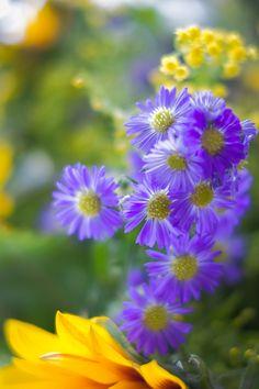 Pretty Purple & Yellow Flowers