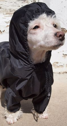 Rain Suit for dogs - I know just how this dog is feeling right now